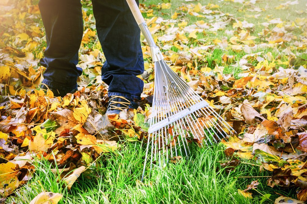 A man is using a rake to clean the leaves and other debris off of his yard as the season changes from winter to spring.